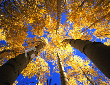 ist2_6277591-yellow-forest-canopy